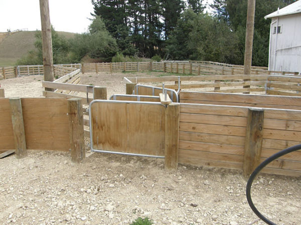 Sheep Yard Draft